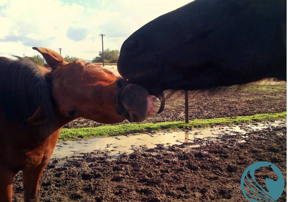 Horses cleaning