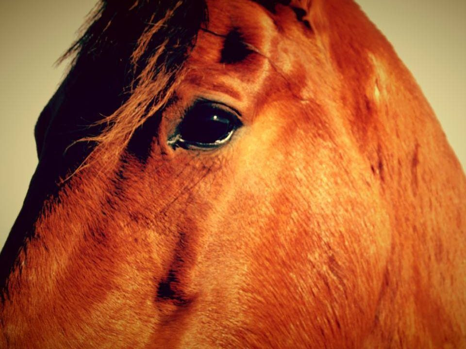 horses look into your soul