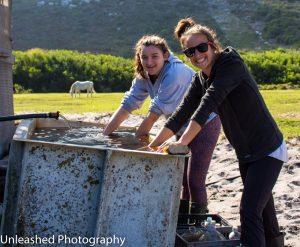 Unleashed Photography Tom Ro Haven Volunteers